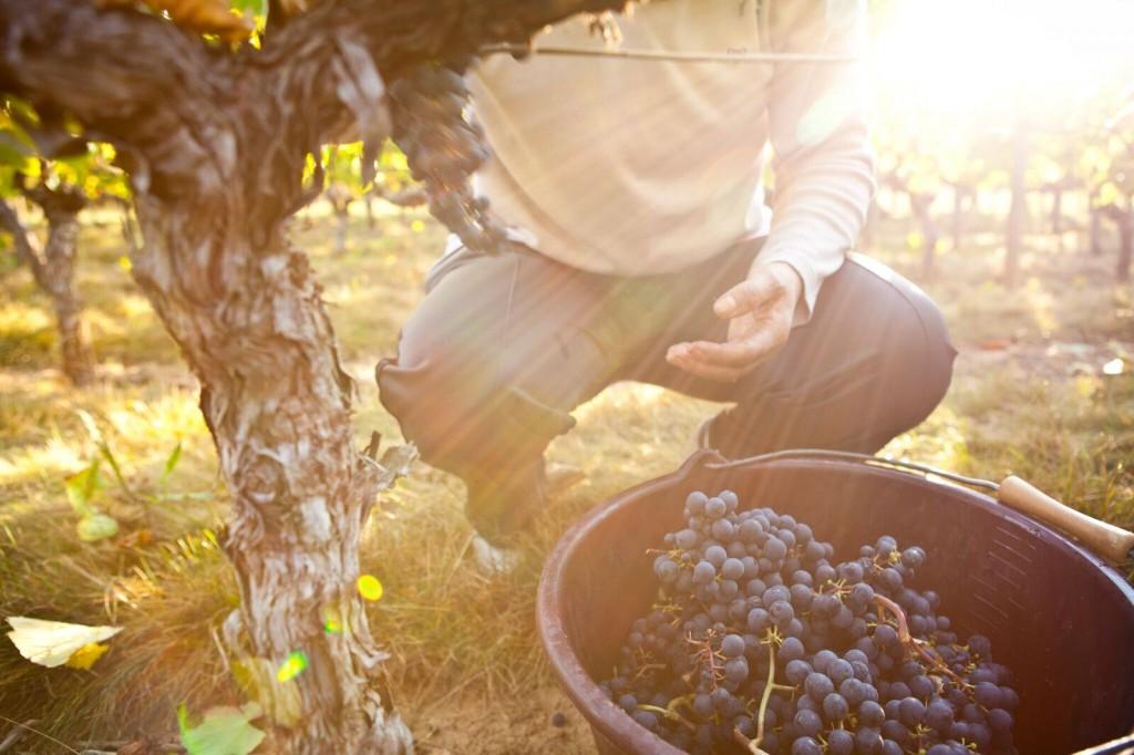 Gironde - Les pieds dans la vigne